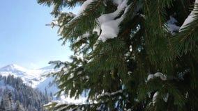 Neve di macrofotografia sui rami verdi di un abete rosso Piano da passare verso la grande immagine video d archivio