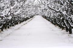 Neve di orario invernale Immagine Stock