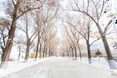 Neve di stagione degli alberi Immagini Stock