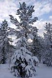 Neve do inverno foto de stock royalty free