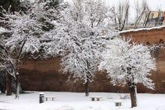 Neve do inverno Fotos de Stock
