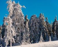 Neve do inverno imagens de stock