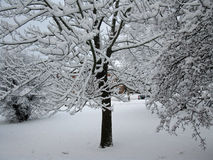 Neve do inverno fotografia de stock