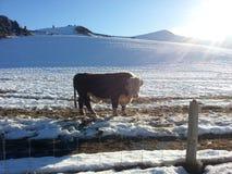 Neve do inverno fotografia de stock royalty free