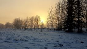 A neve do inverno ajardina o nascer do sol Imagens de Stock
