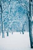 A neve do inverno cobriu a floresta Fotografia de Stock Royalty Free