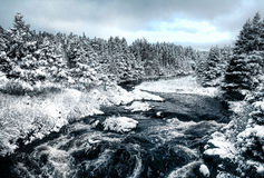 Neve do inverno em Canadá Imagem de Stock