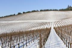 Neve do inverno nos vinhedos de Oregon ocidental Imagem de Stock