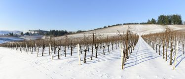 Neve do inverno nos vinhedos de Oregon ocidental Imagens de Stock
