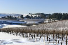 Neve do inverno nos vinhedos de Oregon ocidental Foto de Stock
