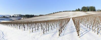 Neve do inverno nos vinhedos de Oregon ocidental Imagem de Stock Royalty Free