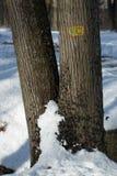 Neve e árvore Imagens de Stock