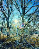 Neve e árvores Foto de Stock Royalty Free