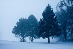 Neve e árvores azuis no inverno Imagens de Stock Royalty Free