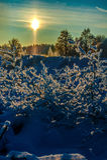 Neve e céu azul com nuvens e vara Fotografia de Stock
