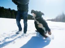 Neve e cane Fotografia Stock Libera da Diritti