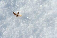 Neve e folha foto de stock royalty free