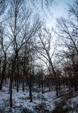 Neve e foresta Immagine Stock