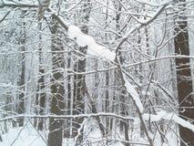 Neve e geada nos ramos de árvore Inverno no parque Fotos de Stock