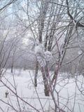 Neve e geada nos ramos de árvore Inverno no parque Foto de Stock Royalty Free