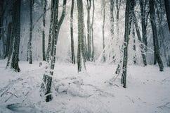 Neve e geada que cobrem tudo na floresta do inverno Imagens de Stock Royalty Free