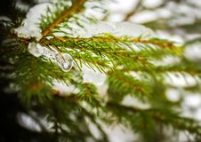 Neve e gelo no ramo de árvore do abeto imagens de stock