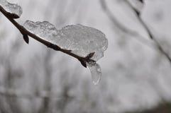 Neve e germoglio Fotografie Stock Libere da Diritti