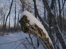 Neve e ghiaccio su un albero fotografia stock libera da diritti