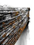 Neve e lichene Immagini Stock
