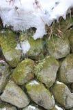Neve e musgo Fotografia de Stock