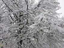A neve e o gelo cobriram a árvore e os ramos Imagem de Stock