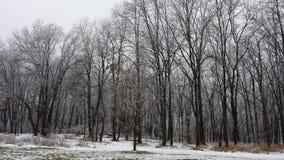 A neve e o gelo cobriram a floresta 2 Imagem de Stock