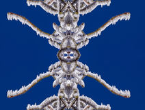 A neve e o gelo nos ramos são mágicos Imagem de Stock Royalty Free