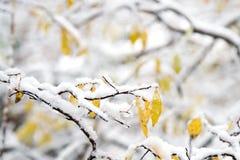 Neve e paesaggio di inverno Fotografia Stock