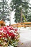 Neve e paisagem do inverno imagens de stock royalty free