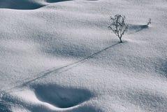 Neve e pianta Fotografia Stock Libera da Diritti