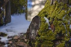 Neve e piccola erba sull'albero Fotografia Stock Libera da Diritti