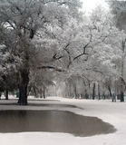 Neve e pioggia Immagine Stock