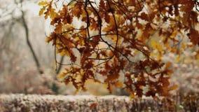 Neve e pioggia nel parco di autunno Chiuda su dell'albero Nevicando nel silenzio e nella natura della foresta Pianta le piantatri stock footage