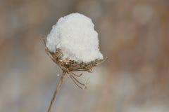 Neve e planta Foto de Stock Royalty Free