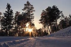 Neve e sole nel legno Immagine Stock Libera da Diritti