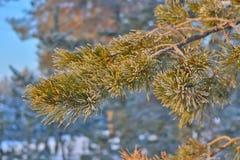 Neve e sole nel legno Immagini Stock