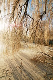Neve e sombra Imagem de Stock