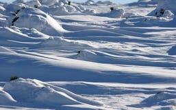 Neve ed abete rosso in carpatico Fotografia Stock Libera da Diritti