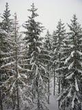 Neve ed alberi Fotografia Stock