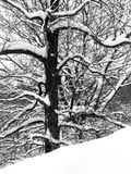 Neve ed alberi Fotografia Stock Libera da Diritti