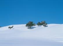 Neve ed alberi Immagini Stock Libere da Diritti