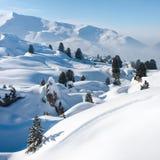 Neve ed alberi. Le alpi Fotografie Stock