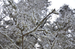 Neve ed albero 5 Fotografia Stock Libera da Diritti
