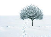 Neve ed albero Fotografia Stock Libera da Diritti